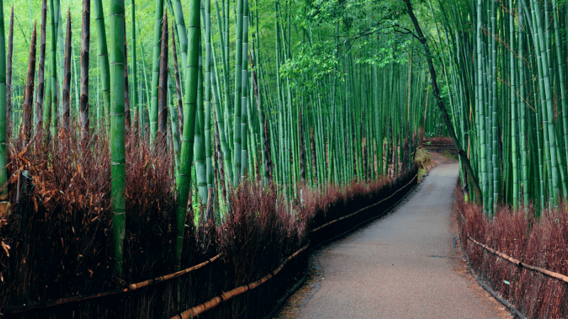 THE MOST BEAUTIFUL PLACES TO VISIT IN THE WORLD BY PRIVATE JET AFTER COVID-19 - Arashiyama Bamboo Grove, Japan