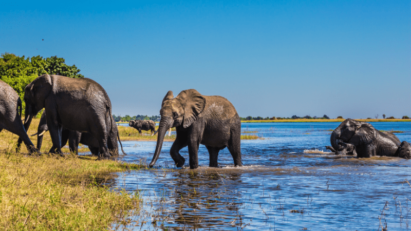 THE MOST BEAUTIFUL PLACES TO VISIT IN THE WORLD BY PRIVATE JET AFTER COVID-19 - Okavango Delta, Botswana